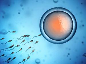 Mejora del espermiograma con arginina
