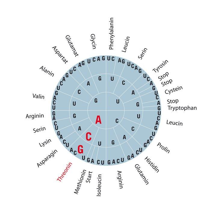 Informatieve tabel van de aminozuren